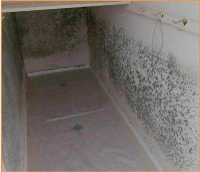 Mold Taking Over Your Home?